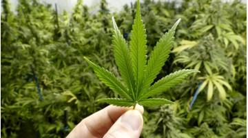 Legalizzazione della cannabis: i risultati terapeutici