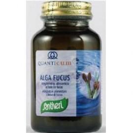 ALGA FUCUS 113CPR SANTIVERI